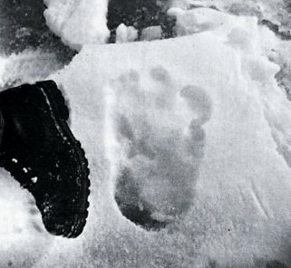 yeti footprint w: boot